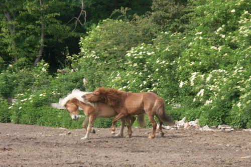 walzer-und-ein-anderes-pferd-auf-einer-koppel-15-friederike-erlinghagen-dipl-biologin-burgwedel