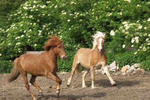 walzer-und-ein-anderes-pferd-auf-einer-koppel-24-friederike-erlinghagen-dipl-biologin-burgwedel
